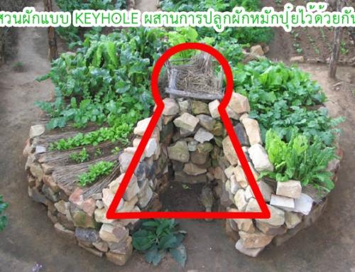 สวนผักแบบ KEYHOLE ผสานการปลูกผักหมักปุ๋ยไว้ด้วยกัน
